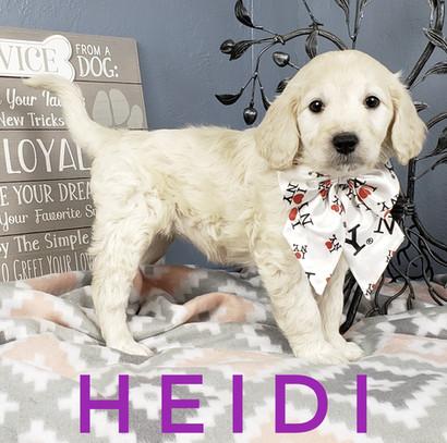 Heidi (7).jpeg