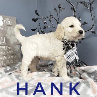 Hank (3).jpeg