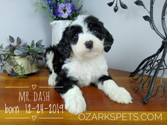 Mr. Dash