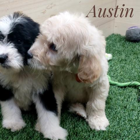 Austin (3).jpeg