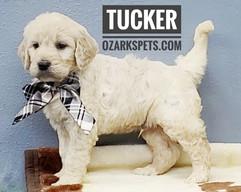 Tucker (6).jpeg