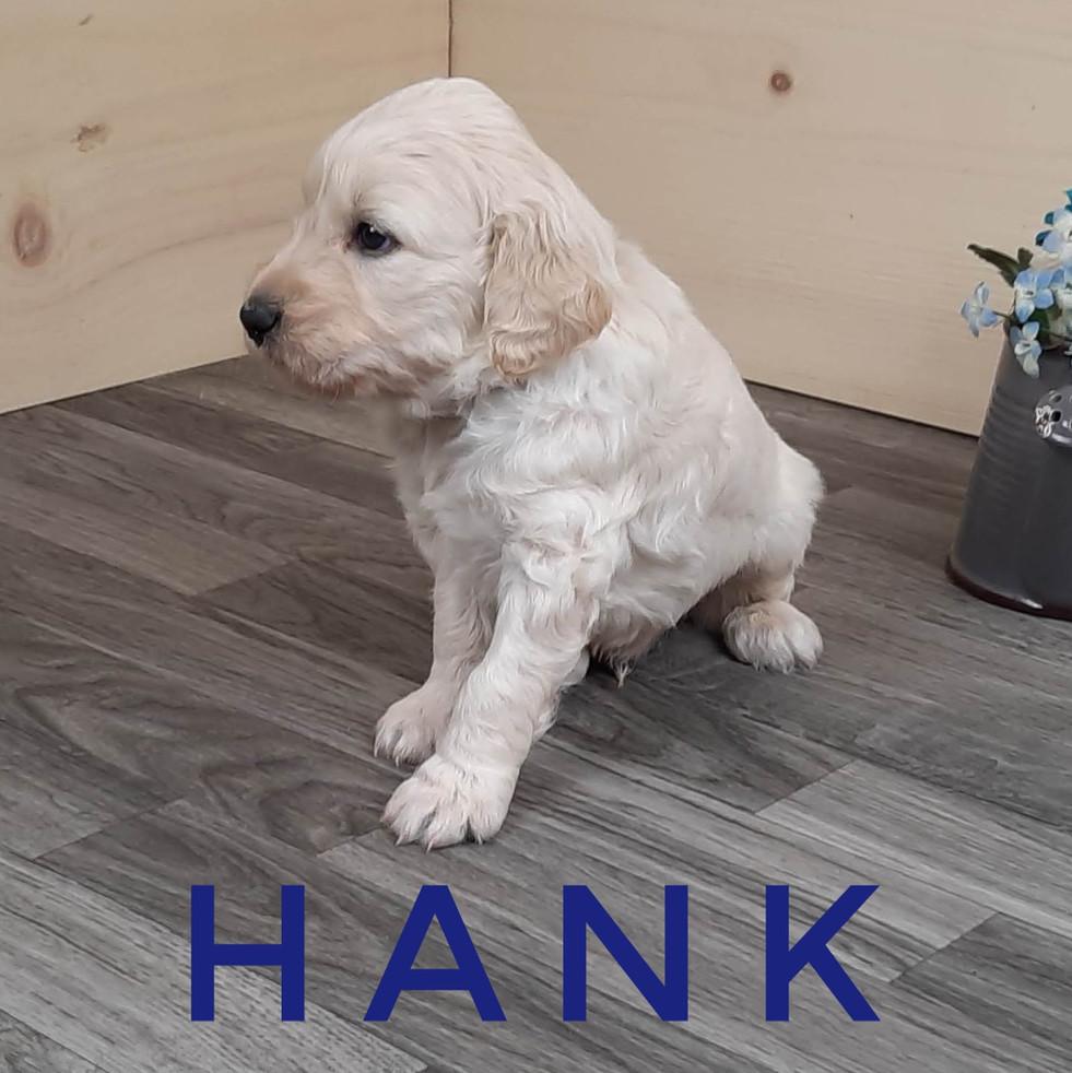 Hank (2).jpeg