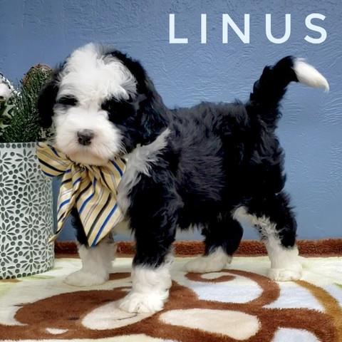 LINUS (6).jpeg