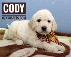Cody (9).jpeg