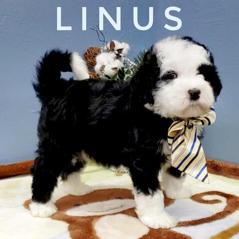 LINUS (7).jpeg
