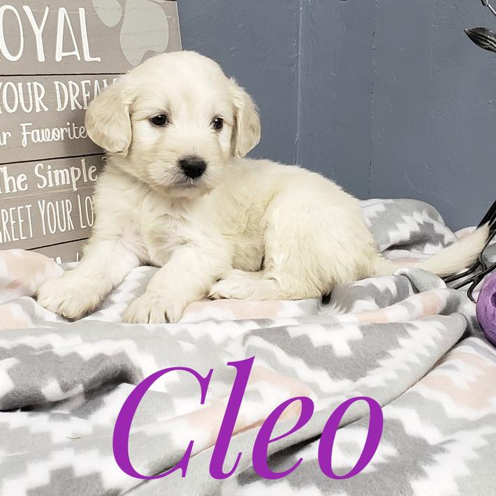 Cleo (6).jpeg