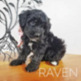 raven (5).jpg
