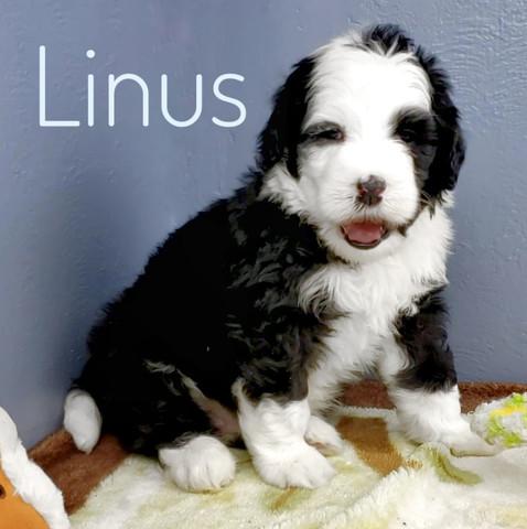 Linus (3).jpeg