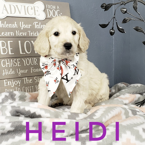 Heidi (5).jpeg