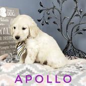 Apollo (4).jpeg