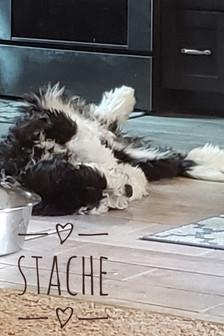 Stache