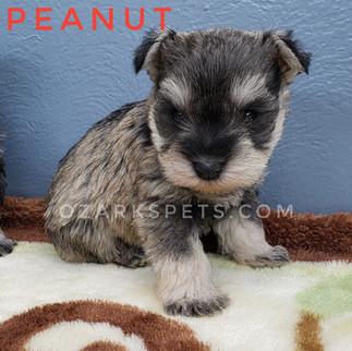 Peanut (6).jpeg