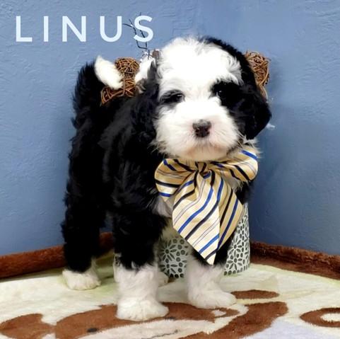 LINUS (5).jpeg