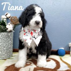 Tiana (9).jpeg