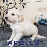 Apollo.jpeg