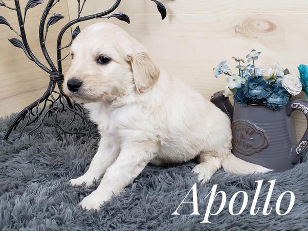 Apollo (2).jpg