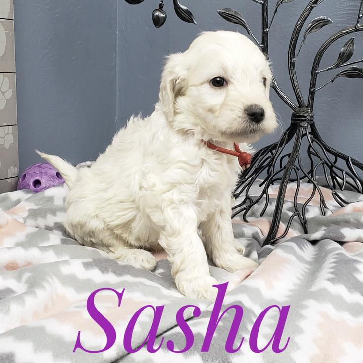 Sasha (1).jpeg