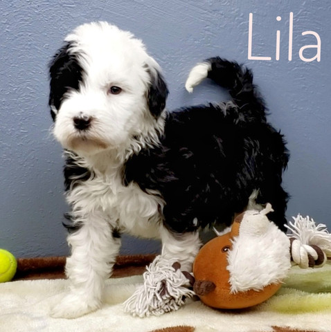 Lila (8).jpeg