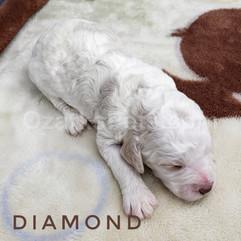 diamond (1).jpeg