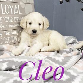 Cleo (5).jpeg