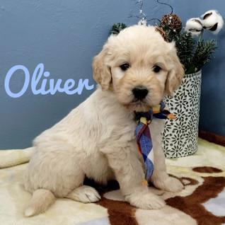 Oliver (1).jpeg