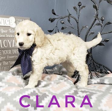 Clara (2).jpeg