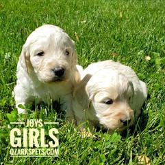Joy Girls (11).jpeg