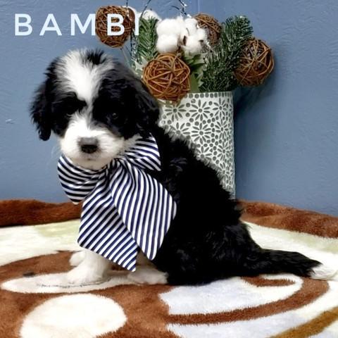 BAMBI (5).jpeg