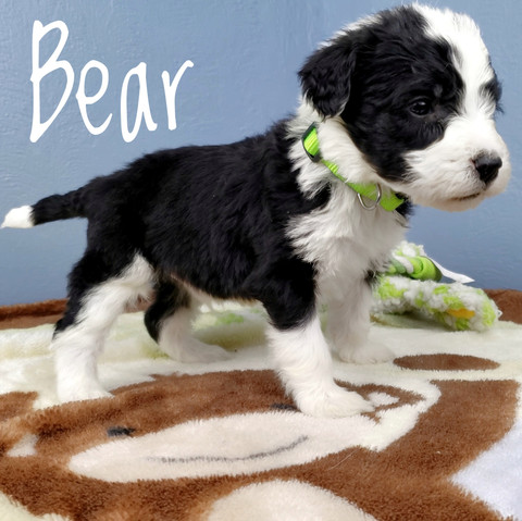 bear (1).jpeg