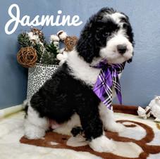 Jasmine (16).jpeg