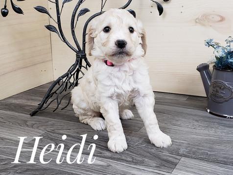Heidi (1).jpg