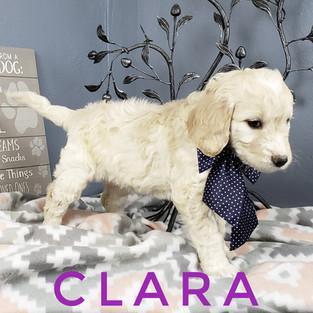 Clara (5).jpeg