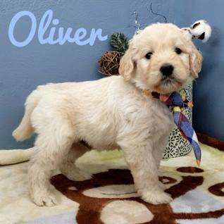 Oliver (3).jpeg