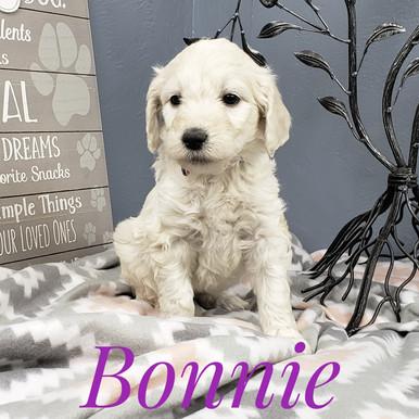 Bonnie (1).jpeg