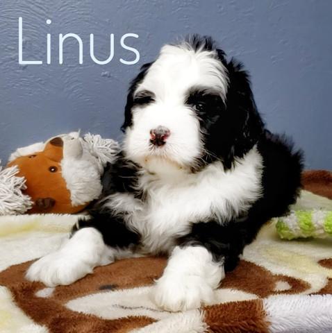 Linus (1).jpeg