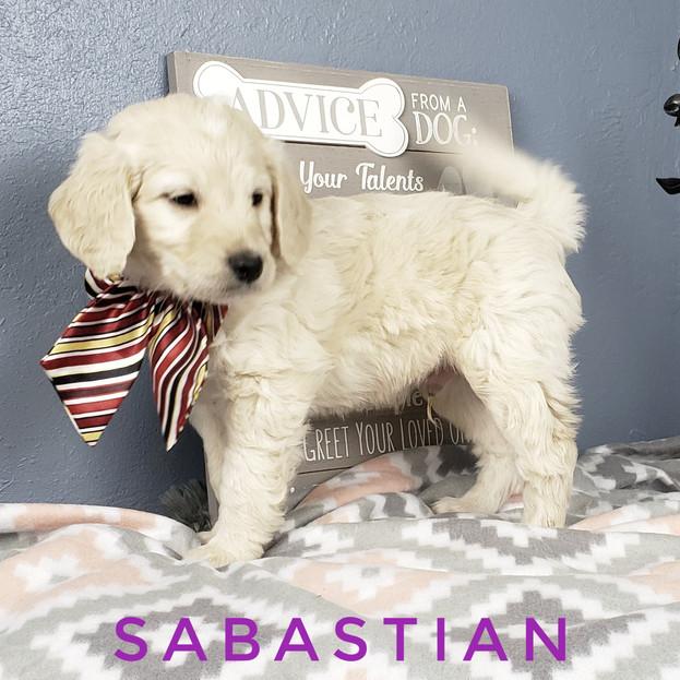 Sabastian (4).jpeg