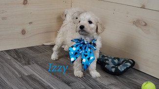 Izzy (2).jpg