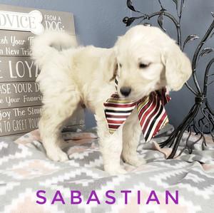 Sabastian (1).jpeg