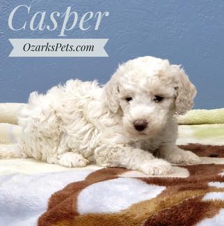 Casper (5).jpeg