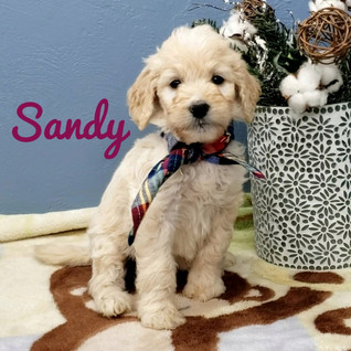 Sandy (2).jpeg