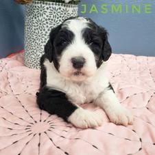 Jasmine (3).jpeg