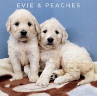 Evie Peaches (4).jpeg
