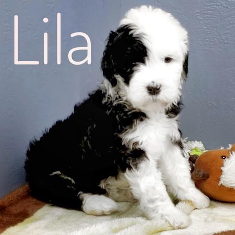 Lila (7).jpeg