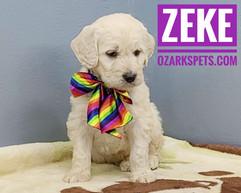Zeke (4).jpeg