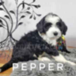 pepper (1).jpg