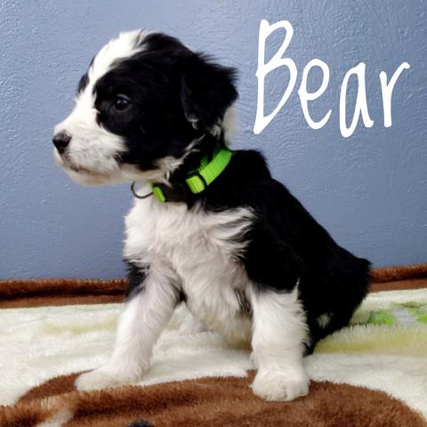 bear (3).jpeg