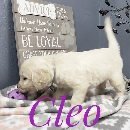 Cleo (12).jpeg
