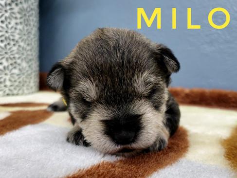 Milo (2).jpeg