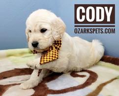 Cody (10).jpeg
