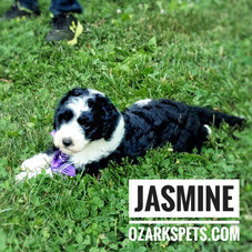 jasmine (12).jpeg
